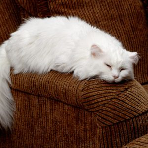 Bad Pet Habit #6: Your cat jumps onto all your furniture.