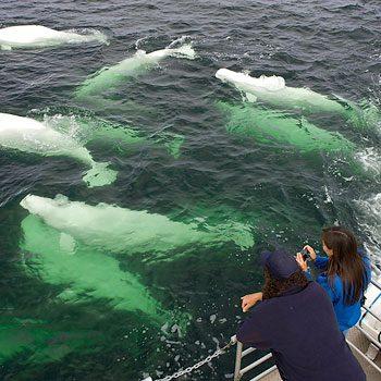 7-whalewatching_350