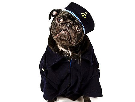 Rocky the pug