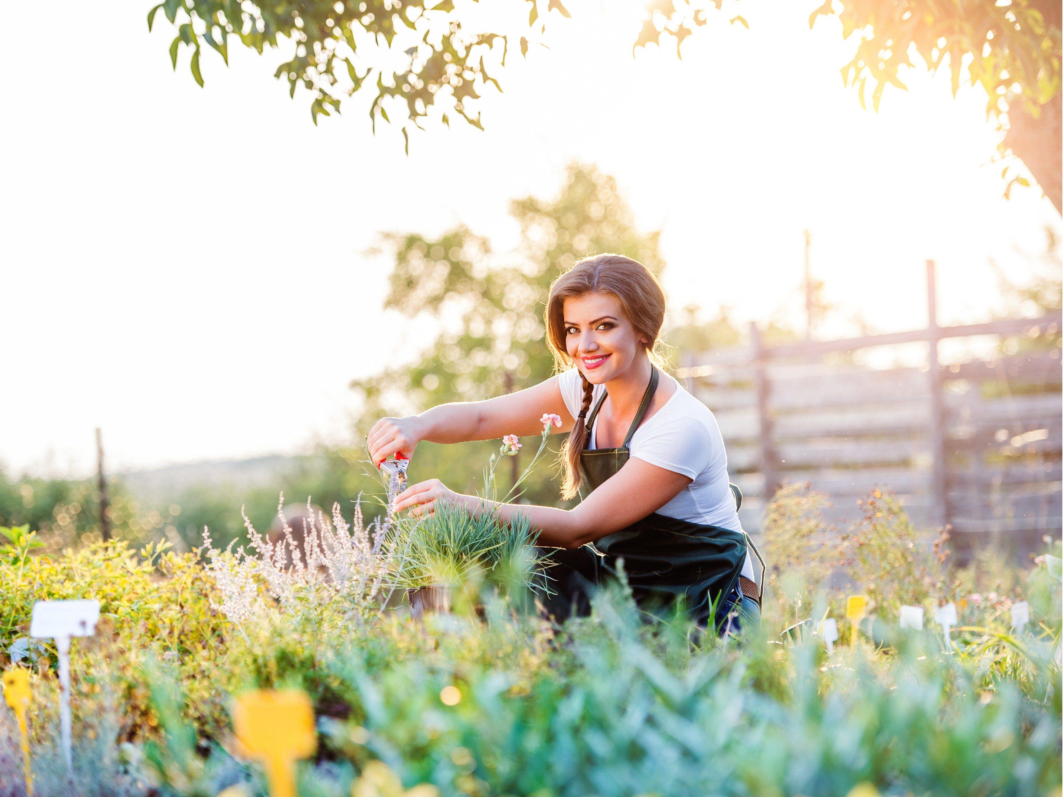 Grow Your Own Healing Garden