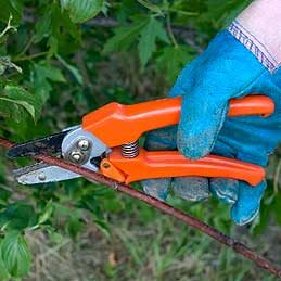 Hand Pruners and Loppers
