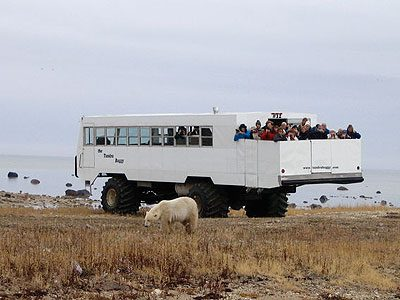 Last Stop in Churchill: Tour the Tundra