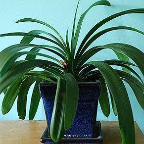 Potted Plant Secrets