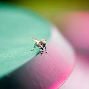 Exterminate Houseflies