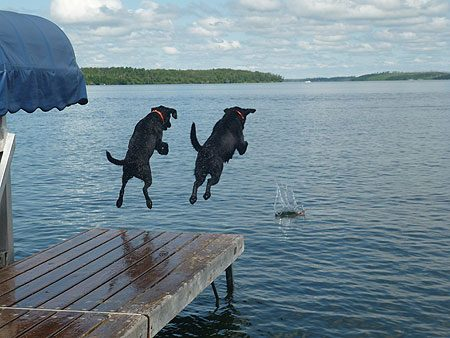 Labs in the Water