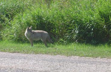 Elk Island National Park, Alta.