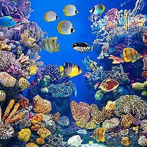 10 Awesome Aquarium Tips