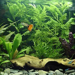 Freshwater Tip #3