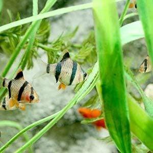 4. Freshwater Tip #4