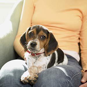 Top 5 Dog Commands