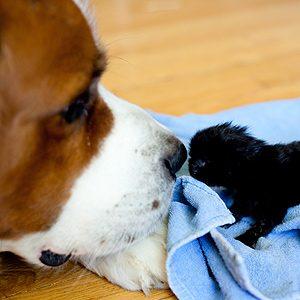 5 Great Pet Pics Taken by Reader's Digest Fans