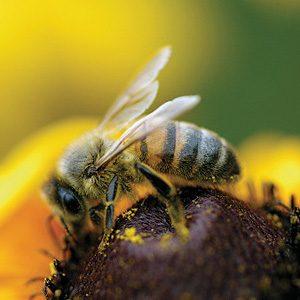 3. Bomb Detecting Bees