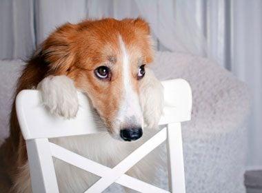 Sweet Breath Dog Treats