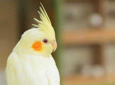 Keep Your Bird Cool