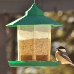 5 Ways to Make Wild Birds Happy