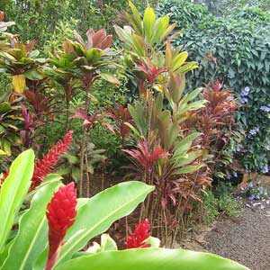 4. McBryde Garden, National Tropical Botanical Garden