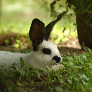 Garden Pest Deterrents