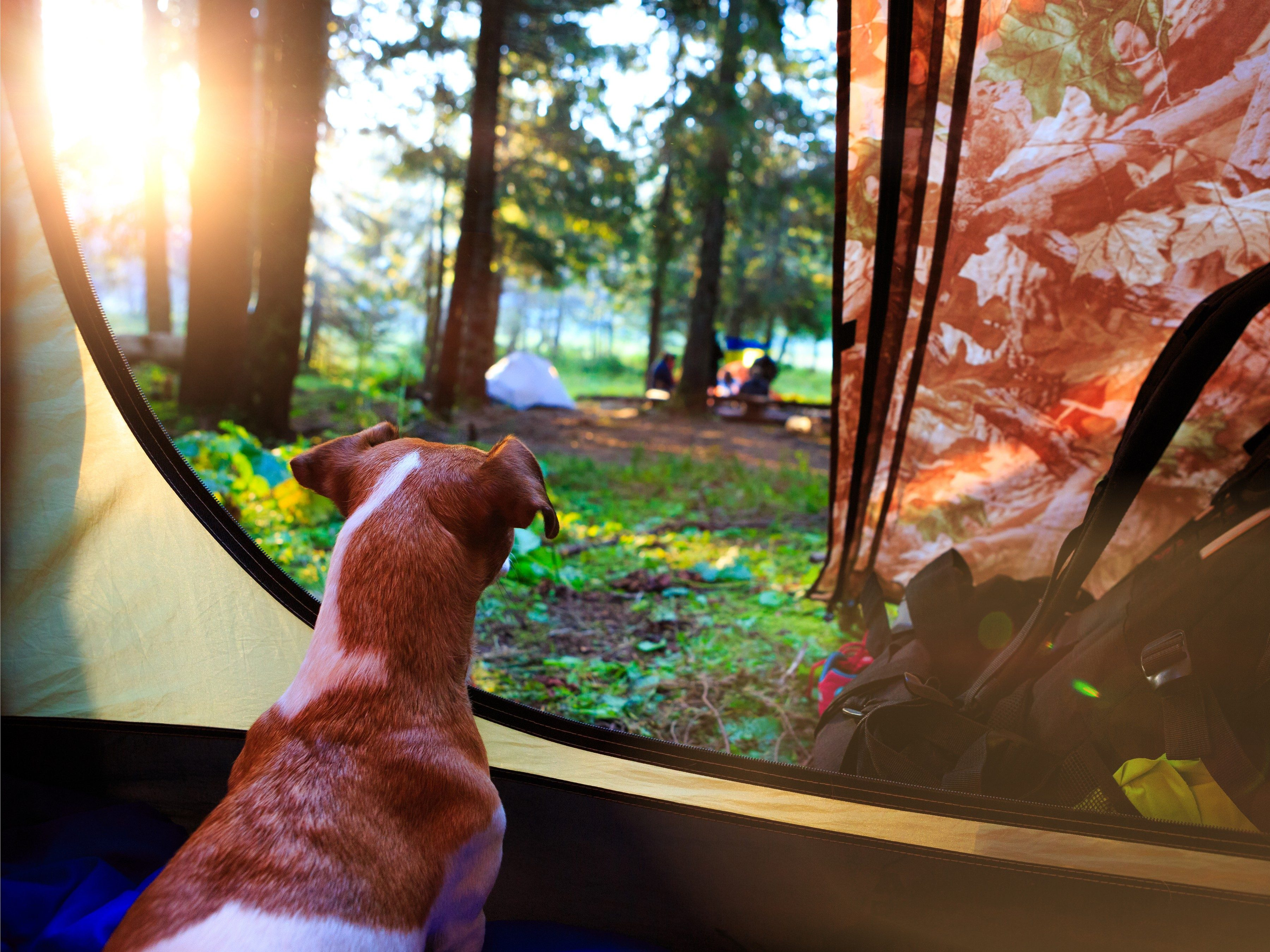 6. Camping is a Dog-Friendly Vacation
