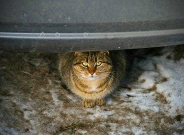 Check Your Car Each Morning