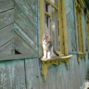 Cat Knowledge: Cats Require Positive Reinforcement