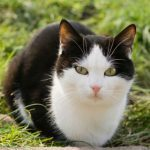 7 Ways to Care For Your Senior Cat