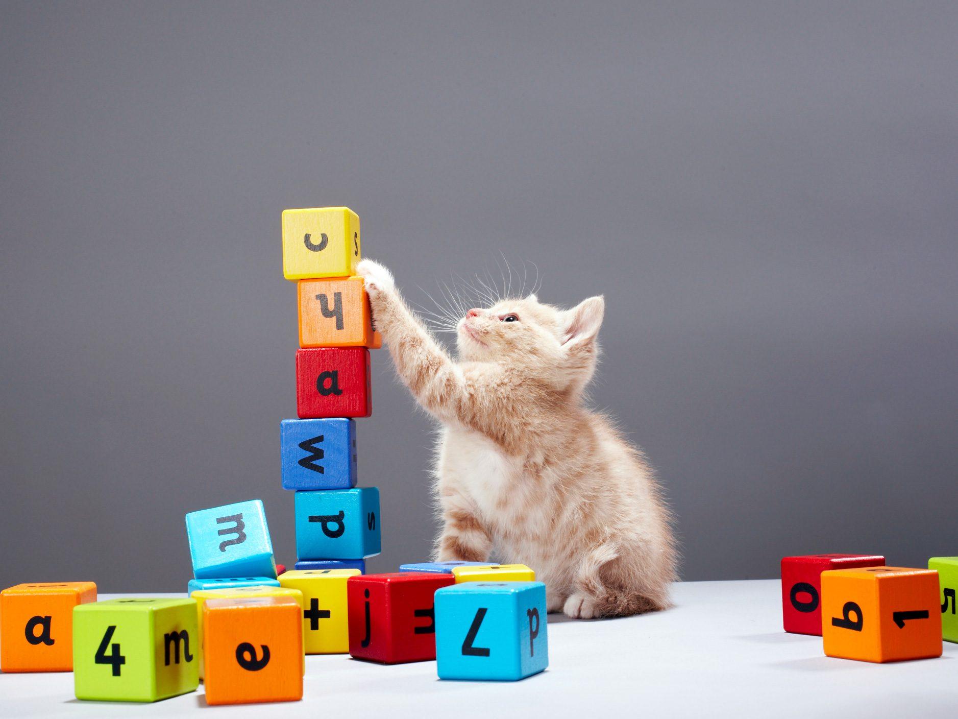 Make Your Cat Friendlier
