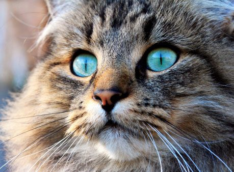 Things to Know About Cats: Cats Don't Always See Eye to Eye