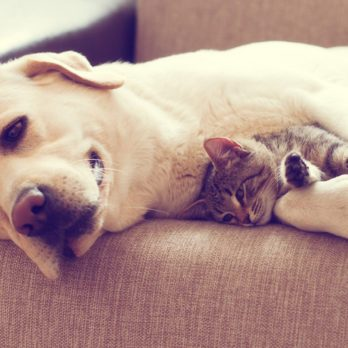 Cats or Dogs: Which are Smarter?