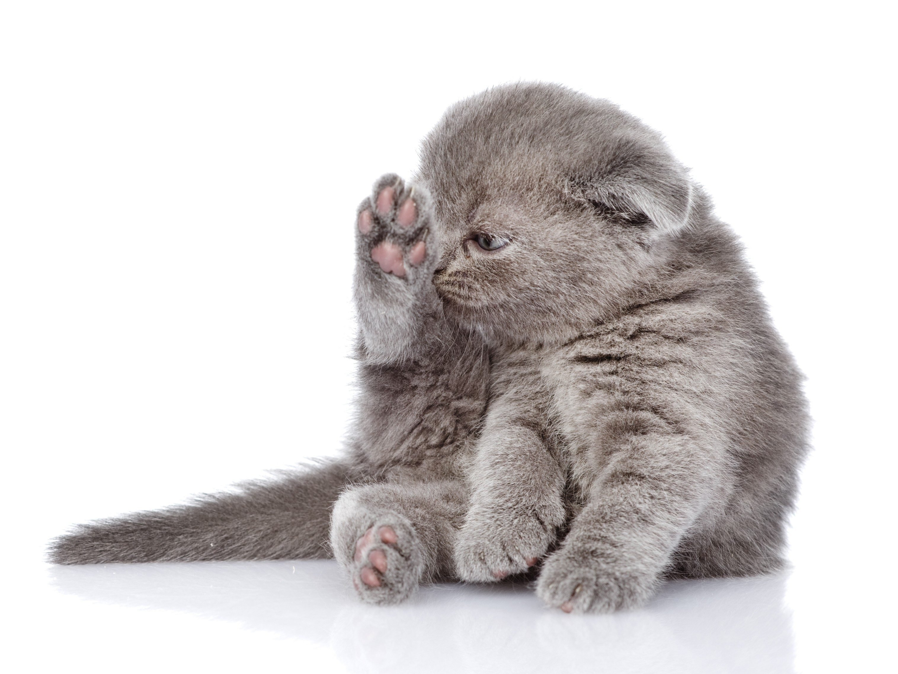 Cats Clean Themselves for Relaxation