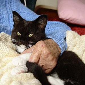 5. Therapy Cats