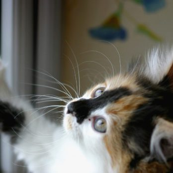 3 Tips for Finding an Apartment with Your Pet
