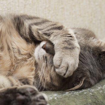 5 DIY Secrets to Fixing Common Pet Problems