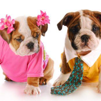 4 Ways to Offset Your Pet's Carbon Pawprint