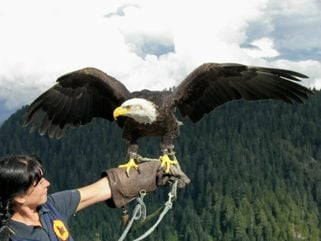 Co-worker with Eagle
