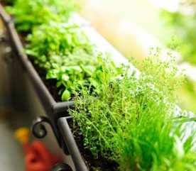 Companion Planting Strategies