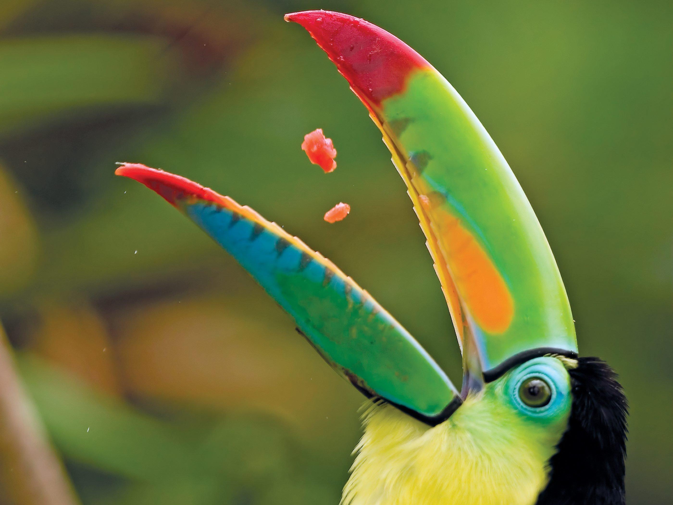 2.Costa Rica
