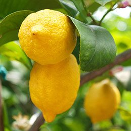4. Lemons Aren't Good for Teeth