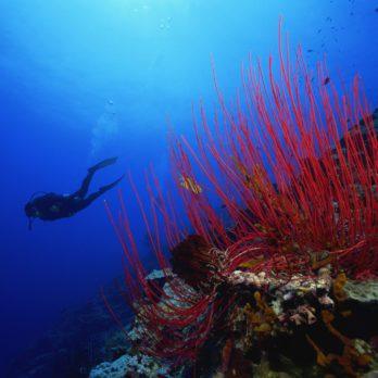 6 Thrilling Dive Destinations Around the World