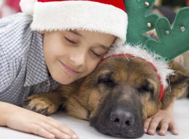5 Tips to Prep Your Pets for Holiday Guests