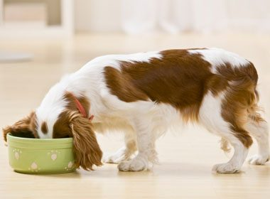 Doggie Salad