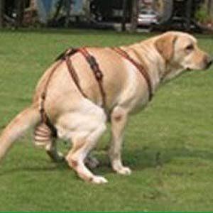 5. Dog Poop Catcher