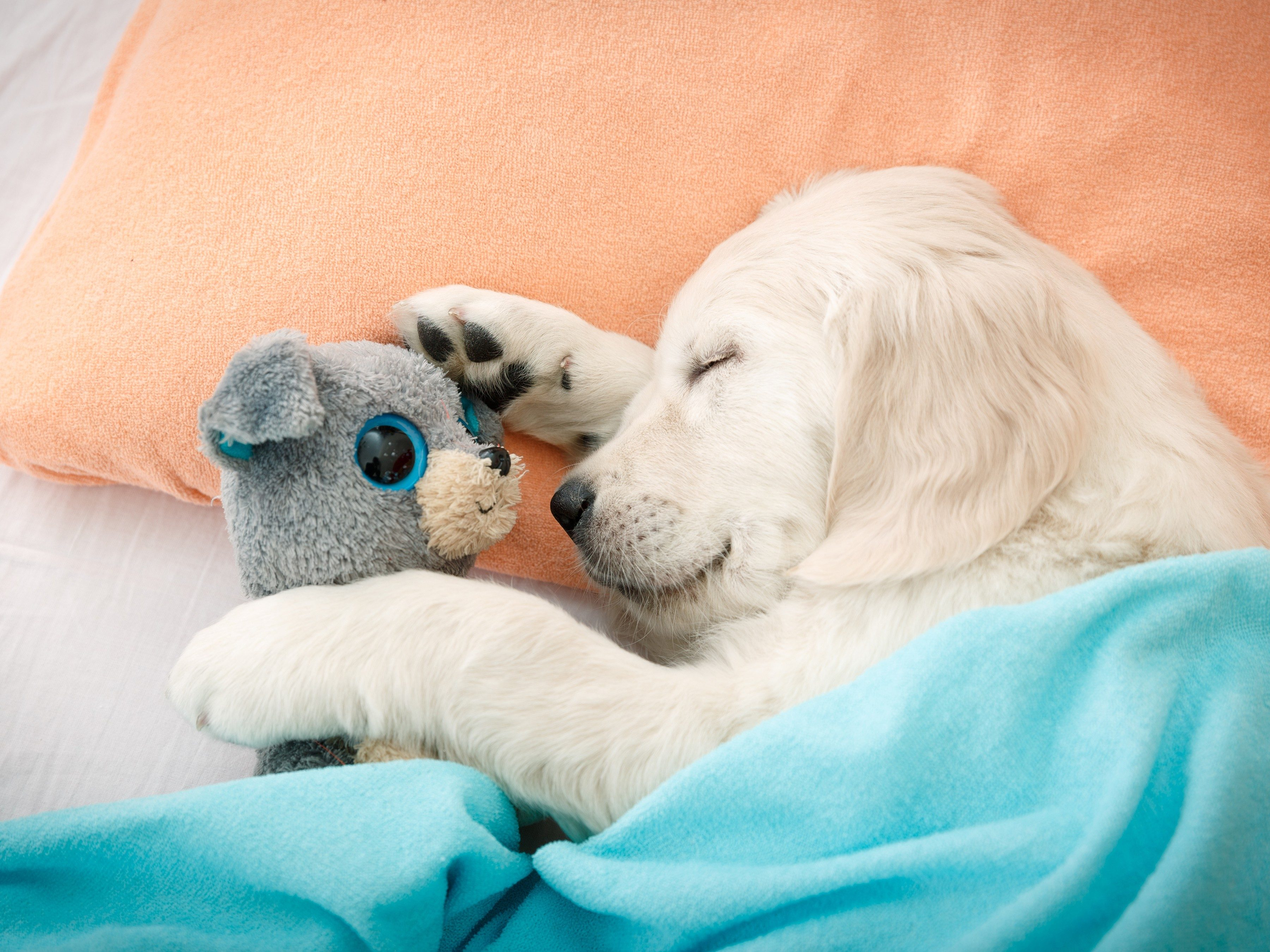 5. Create a safe home for your dog