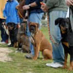 How to Choose Dog Training Classes