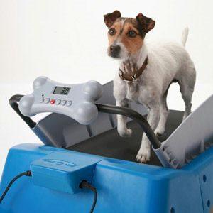 3. Dog Treadmill