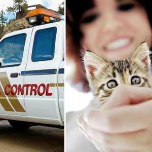 Feline Fan Facts: Good Samaritans?