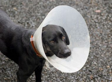 10. Veterinary Pain Relievers