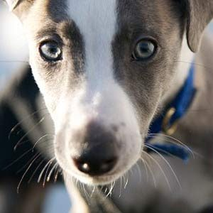 Ask the Expert: Why Does My Dog Eat Dirt?