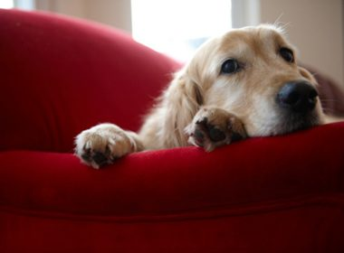 4 Unconventional Health Care Options for Your Pet