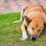4 Ways to Get Rid of Bad Dog Breath