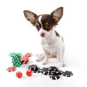 8. Deep Doggy Doo-Doo in Vegas
